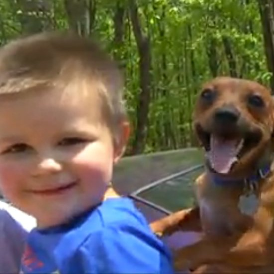 Dog Stays With Boy Lost in the Woods