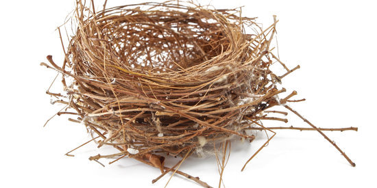 Crafty Bird Steals Sleeping Dog's Fur To Make A Nest