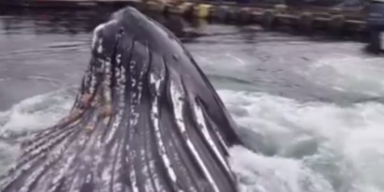 Tiny Boat Dock Gets A GIANT Surprise Visitor