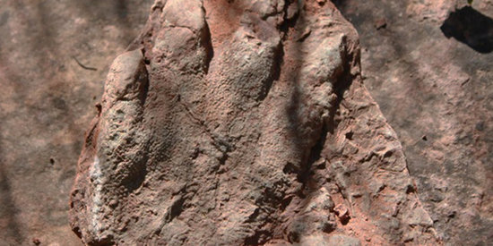 Hiker Happens Upon Prehistoric Footprint Of 230-Million-Year-Old Reptile