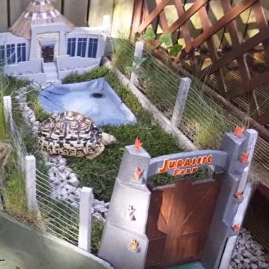 Man Creates Tiny Jurassic Park for His Tortoise, Greatly Improves My Week
