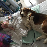 These Basset Hounds Were Determined to Protect Their Tiny Human Until the Very End