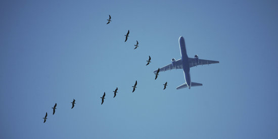 This Technology Could Keep Airports From Slaughtering Birds