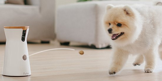 This Treat-Tossing Dog Camera Lets You Send Snacks To Your Pup From Afar