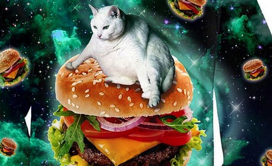 We Celebrate National Hamburger Month With … Cats!