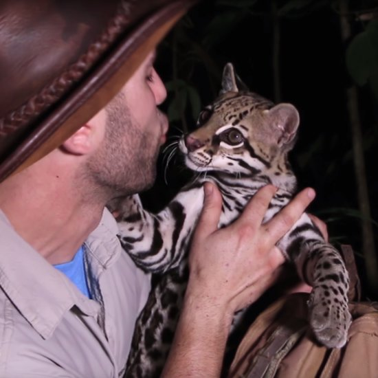 Coyote Peterson Plays With Wild Ocelot | Video
