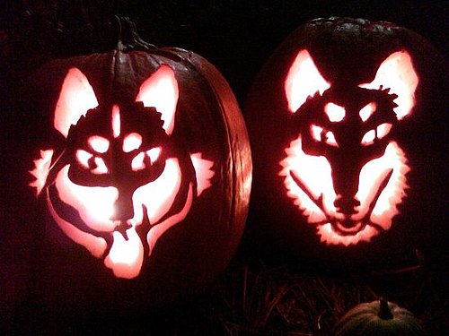 Crafty Community Member Turns Her Dogs Into Pumpkins!