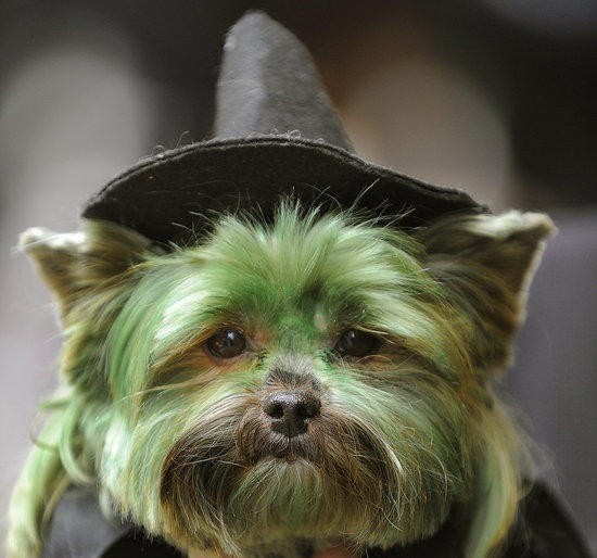 It's All For Splendid Show at the Times Square Dog Day Masquerade!