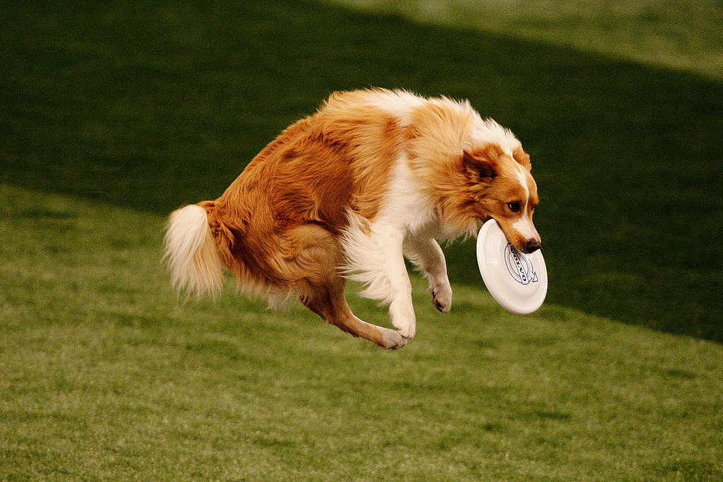 Sport One: Canine Disc