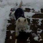 Do Tell: Can Your Dogs Make Snow Angels?
