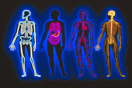 How Well Do You Know Your Anatomy?