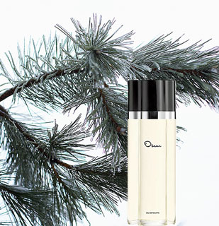 What Fragrances Remind You of the Holidays?