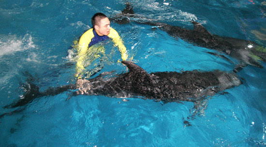 Chinese Basketball Star Saves Dolphin