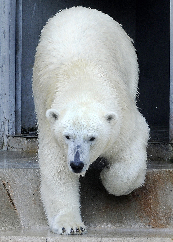 Love Is In the Air! Knut Gets a Mate