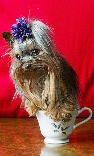Tea Time: Three Trick Treatments With Chamomile