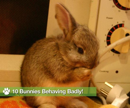 10 Bunnies Behaving Badly!