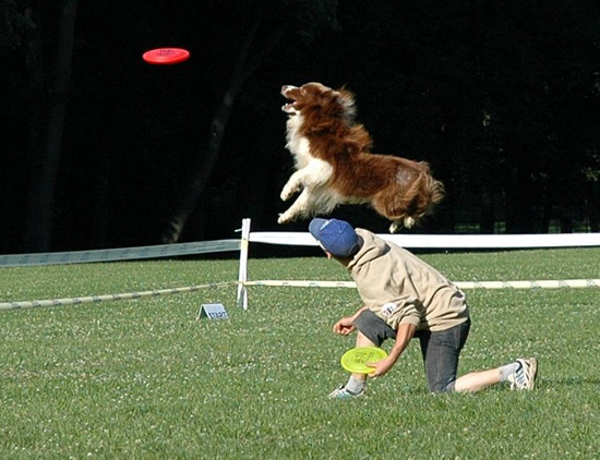 Do Your Pets Play Frisbee?