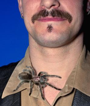Stranger Than Fiction: Spider Venom For Erectile Dysfunction