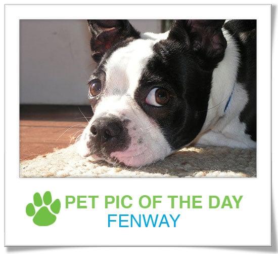 Pet Pics on PetSugar 2008-12-17 09:30:37