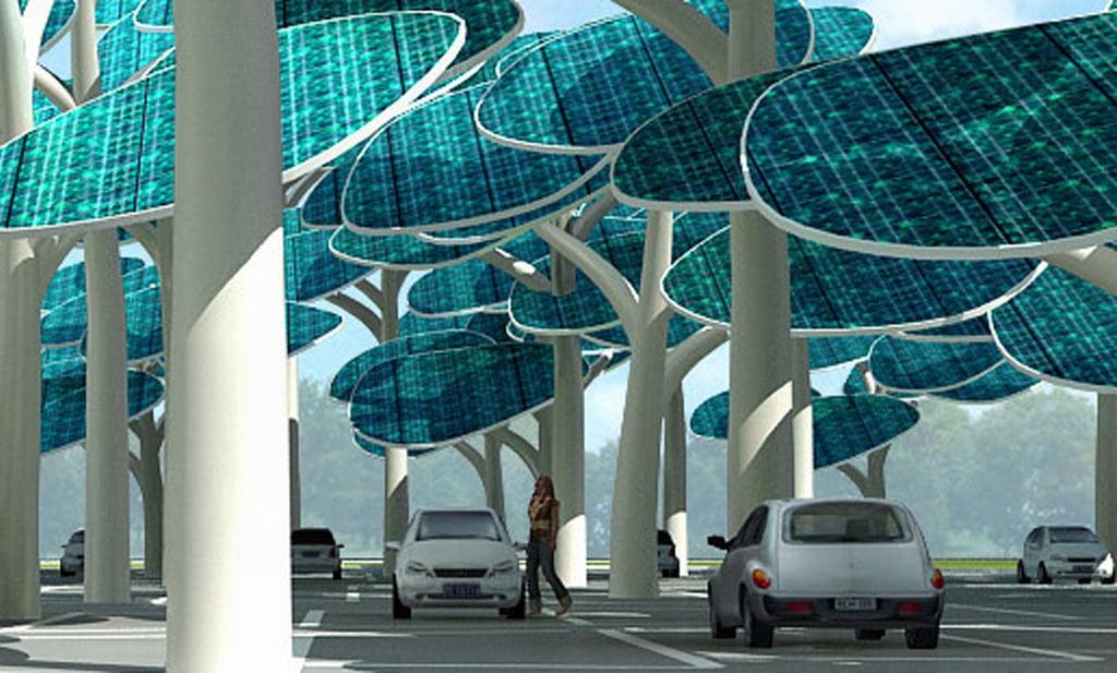 Photos of the Solar Forest