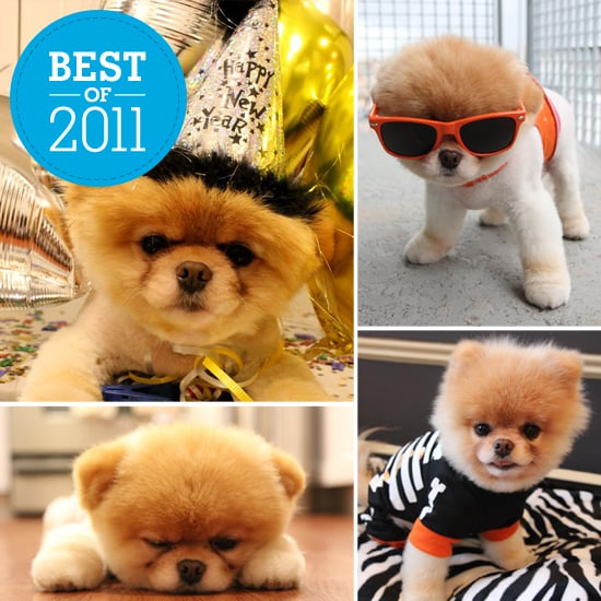 The Year of the Pomeranian: Boo's Cutest Looks of 2011