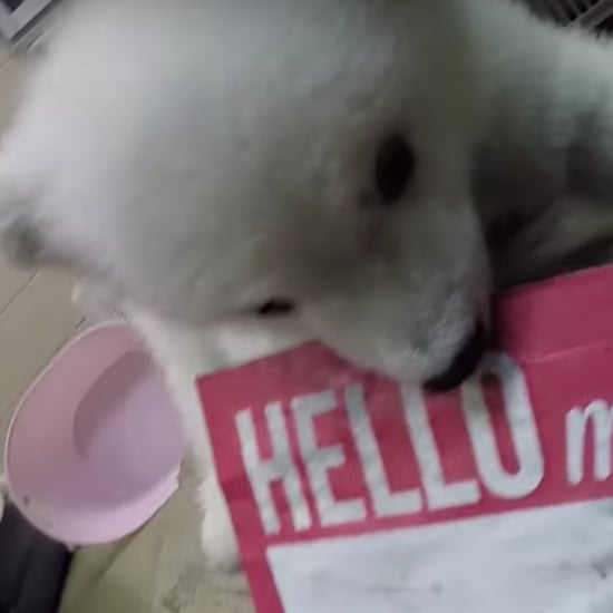 Polar Bear Baby at Columbus Zoo | Video