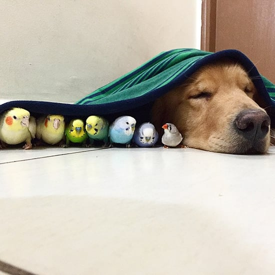 Dog Is Friends With Birds and Hamster
