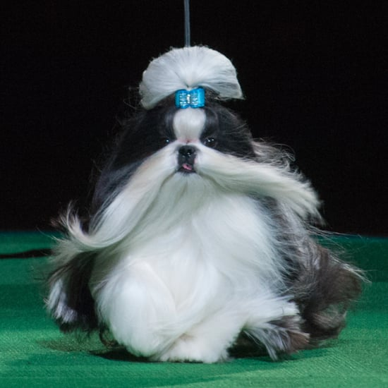 Funny Dog Names at Westminster 2016