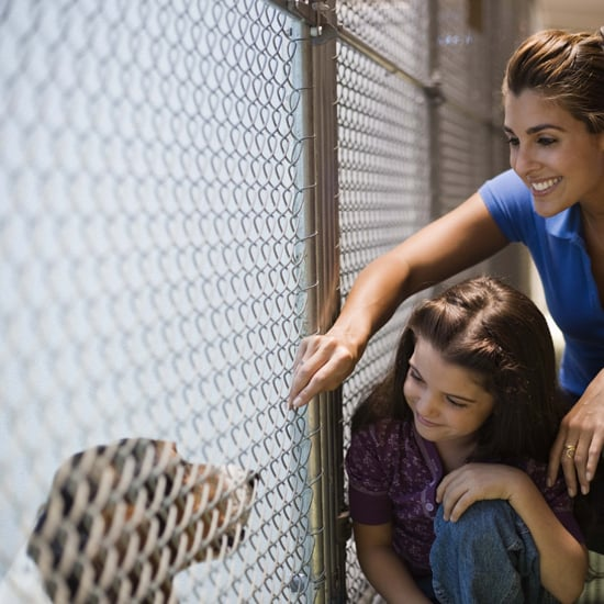 5 Ways Foster Families Help Furry Friends