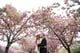 Smooch Under Cherry Blossoms