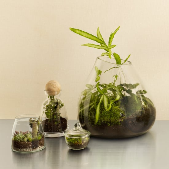 8 cool DIY terrariums