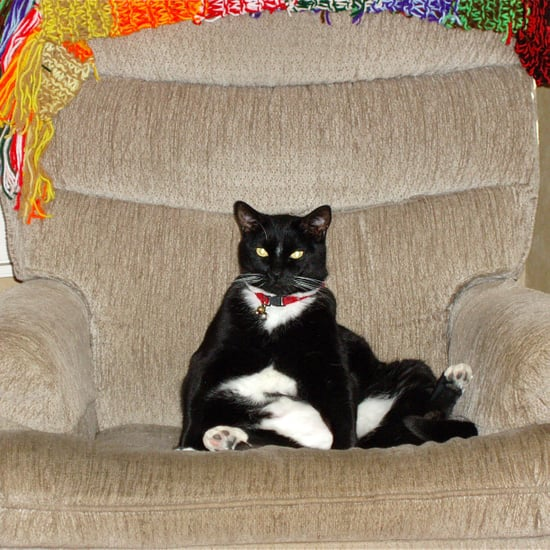 Photos of Cats and Dogs on Furniture