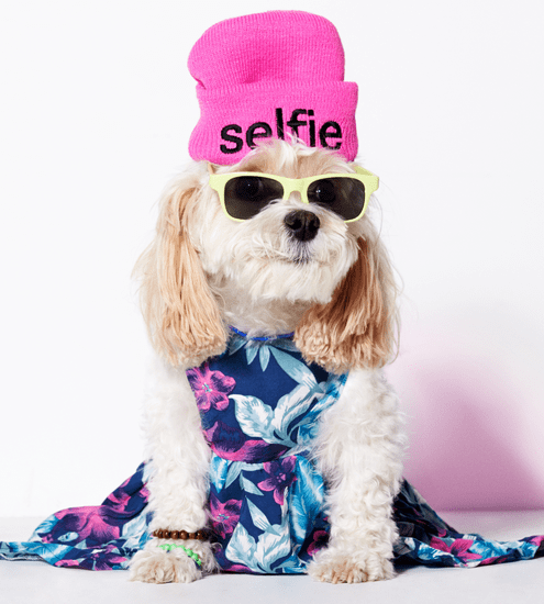 American Eagle Dog Clothes Line