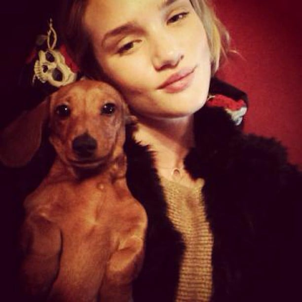 Rosie Huntington-Whiteley cuddled with a cute pup. Source: Instagram user thelovemagazine