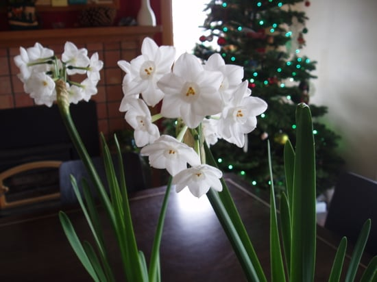 Open House: Holiday Flowers