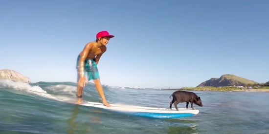 This Family Of Surfing Pigs Is A Pixar Movie Waiting To Happen