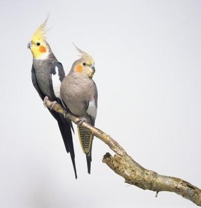 Guess What Bird?
