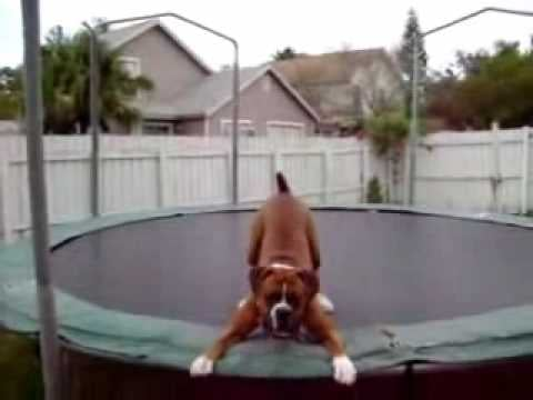 Sunday Funday Video: Doggie Hoppity Hops His Way to My Heart