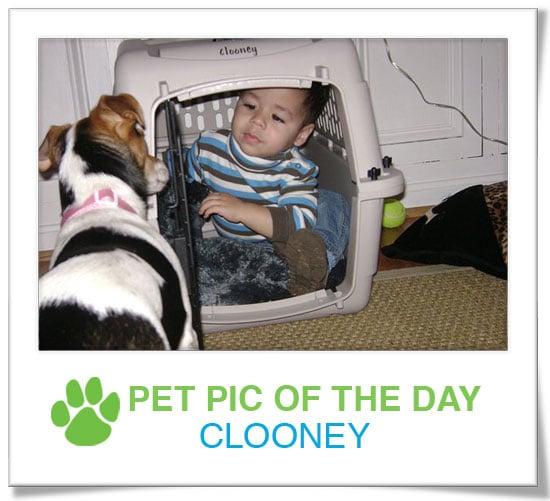 Pet Pics on PetSugar 2009-04-23 09:00:04