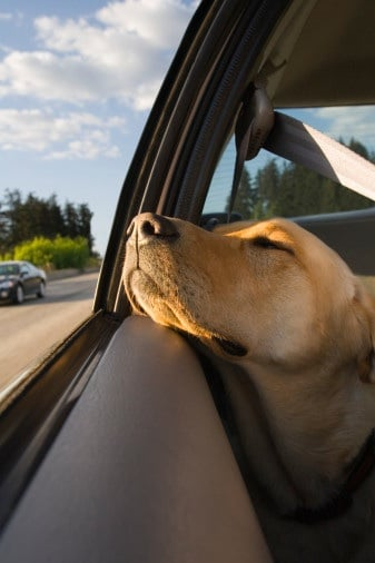 Road Trip Tips For You And Your Pet