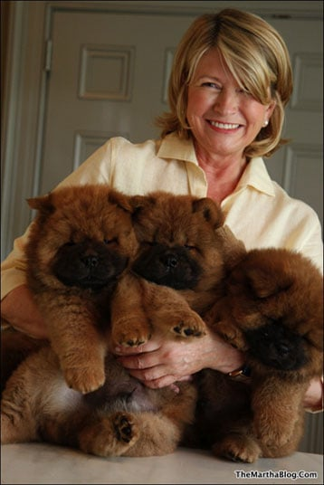 The Scoop: Martha Still Hasn't Picked Her Next Chow