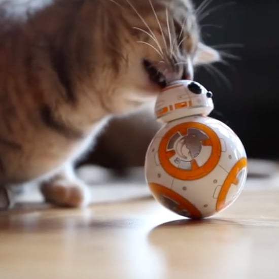 Cat Playing With BB-8 Toy | Video