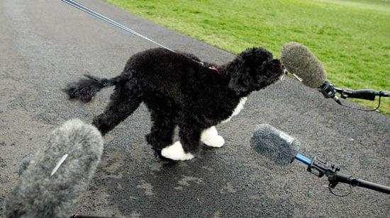 Photos of Barack Obama's Dog Bo