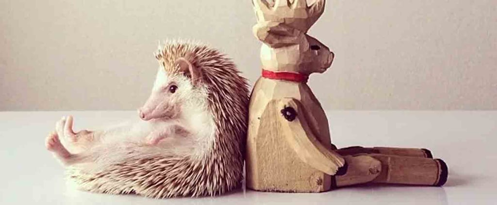 15 Instagram Accounts to Follow If You Are Utterly Obsessed With Animals