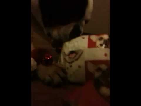 Could Your Pets Pick Out Their Presents From the Pile?