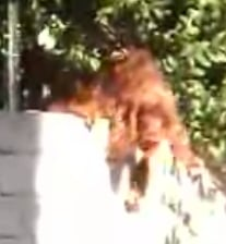Dog Sneaks Out Of House For Play Date