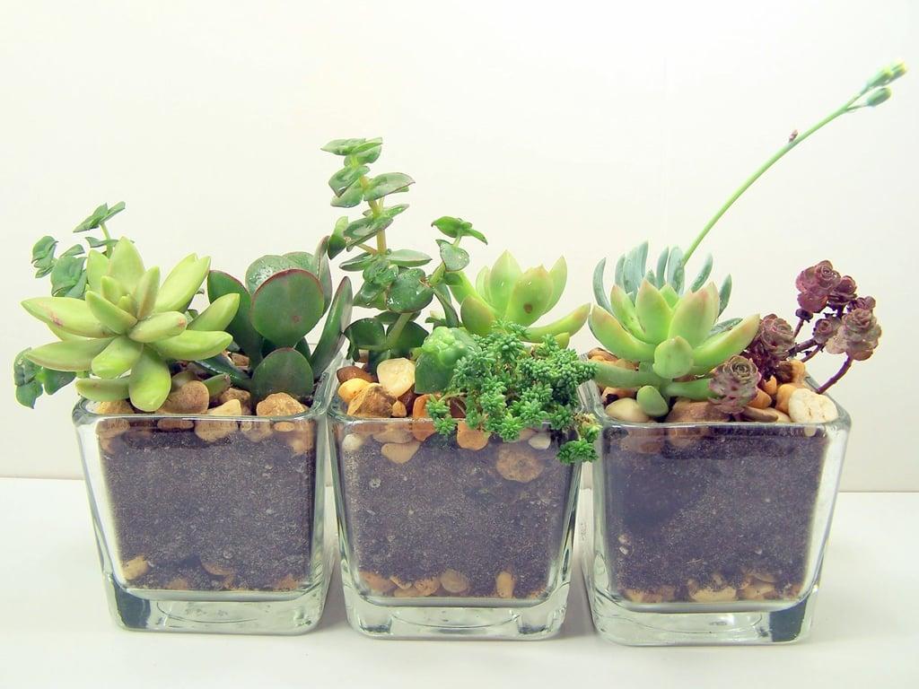 Terrarium Succulent Glass Planters Kit