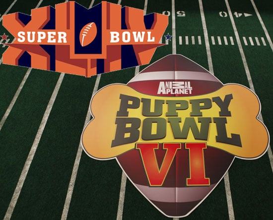 Super Bowl XLIV or Puppy Bowl VI?