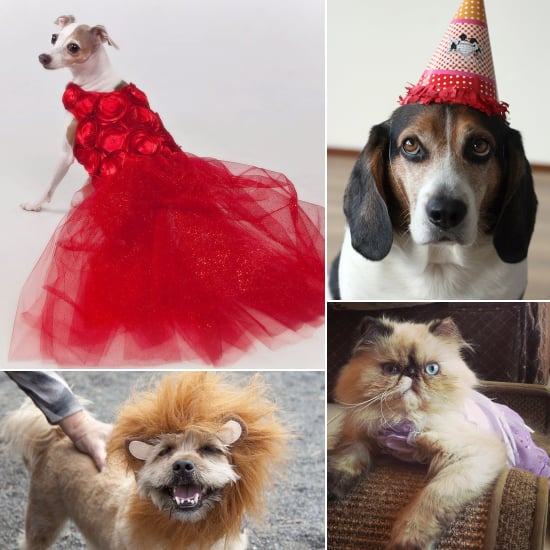 Dressed-Up Pets