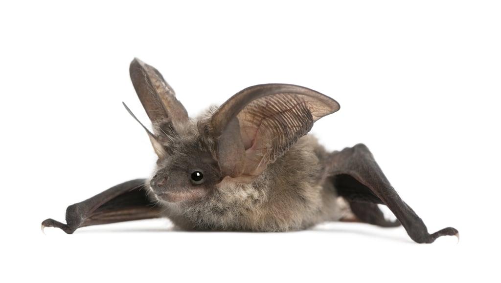 Be Batty